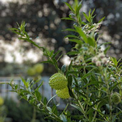 Rare & Exotic Plants